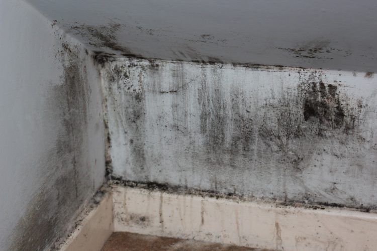 How to Improve Your Health by Ending Damp Problems